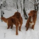 Schnee in Schanze