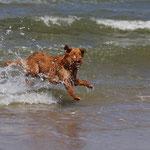 Bly versucht das Wellenreiten