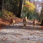 Herbstspaziergang mit Merlin in Wülfrath