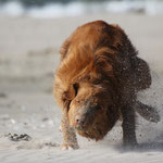 Sandbad Bly