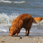 Bly entdeckt Strand und Meer