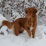 Ayuna`s erster Schnee