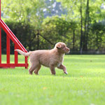 Hundeplatz Kennenlernen beim HSG Ratingen