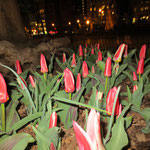 Osterbepflanzung im Madison Square Park