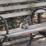 squirrels im Madison Square Park