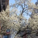 Der Frühling hat NYC fest im Griff.