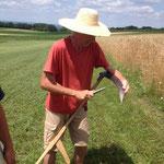 Mitte Juli: Zeit für die Ernte