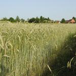 Rolipa, Feld am Lichthof, 29. Juni 2012