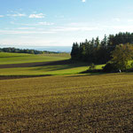 Roggen- und Dasypyrumfeld am 13. Oktober