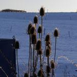 Winter-Licht