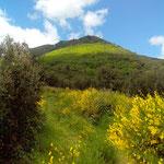 Les Monts d'Orb au printemps.
