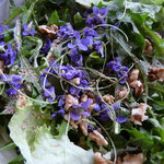 Salade de printemps aux fleurs des champs (violettes.)