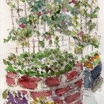 花の文化園 ハガキサイズ