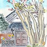20131107近江八幡酒游館 COTMAN surface F2