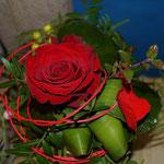 Rote Rose kurz aufgebunden