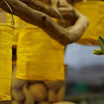 Gelbe Lampions