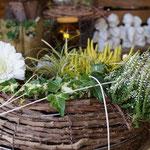 gepflanzter halboffener Ring mit Gerbera