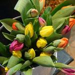 Knackfrische Tulpen