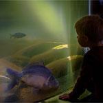 Faszination Fische