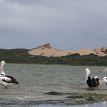 Im Coorong National Park
