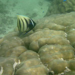 Im Nigaloo Reef
