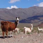 ... und Lamas