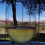 Pause im Weingebiet mit einem Torrontes