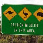 Achtung Wildlife