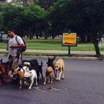 An jeder Ecke gibts Hundesitter