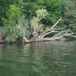 Natur wie an Mulde und Elbe