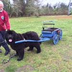 Isadora 17 mois Régionale d'élevage d'Arjuzanx 1er mai 2015
