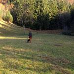 Ruth und Lycka bei einer Vorführung des Jagdverhaltens