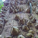 Baum mit speziellem Schutz