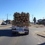 Einer der vielen Holztransporte in der Region Bio Bio