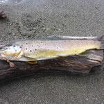 Flavios Geburi Fisch