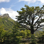 Tierra del Fuego und diese wunderbare Natur