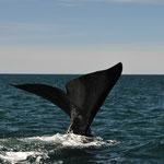 Peninsula Valdez und ihre Wale