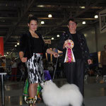 JASAM'S GOLDEN SON OF SILVER BOY - CW, BOS, BOB, Club Winner      Judge: LILIAN CHRISTENSEN ( DENMARK)