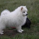 Maho Mirai Yustas 3,5 months old
