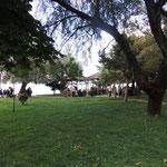 Stadtpark am Ohrid-See