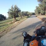 Durch rieseige Olivenhaine nähern wir uns der Küste