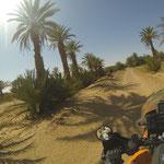 Wir erreichen einen Palmenhain