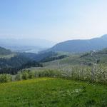 Apfelblüte im Trentino