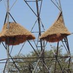 Kunstvoll errichtete Nester von Webervögeln