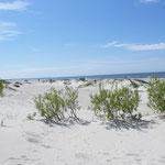 Toller Sandstrand in Liepaja