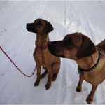 Simba ( Abuya) und Nanga beim Schneespaziergang