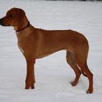 Jamila im Schnee 2010
