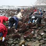 雪も混じる 布海苔採り体験ツアー
