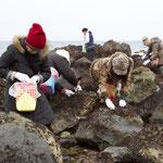 布海苔採り体験ツアー 大漁♪大漁♪
