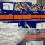Hecula (reine Monastrell-Traube) 90 % gehen in den Export